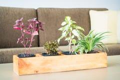 Украшение завода вазы в комнате Стоковые Изображения RF