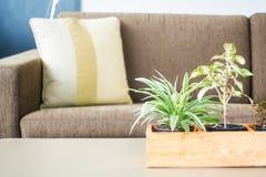 Украшение завода вазы в комнате Стоковое Изображение RF