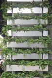 Украшение зеленого растения поддержки в Шэньчжэне стоковое изображение rf