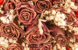 Украшение конспекта запачканное и ретро высушенных цветков розы Стоковое Изображение RF