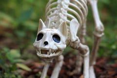Украшение кота хеллоуина Стоковые Фотографии RF