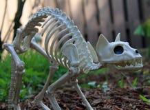 Украшение кота хеллоуина Стоковые Изображения RF