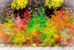украшение красят покрашенную пушистую траву в различной Стоковые Фотографии RF