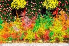 украшение красят покрашенную пушистую траву в различной Стоковые Изображения