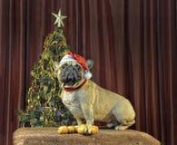 Украшение на китайский канун Нового Годаа с желтой собакой земли Стоковое Изображение