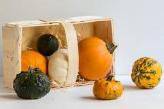 Украшение на хеллоуин, красочные орнаментальные тыквы тыквы, тыквы, осень, сбор, горизонтальный, конец вверх стоковое изображение