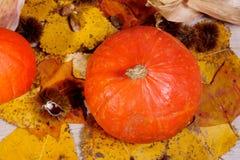 Украшение осени аранжировало с естественными элементами как colorfu Стоковое Изображение