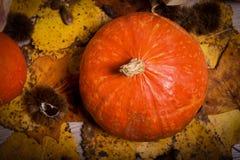Украшение осени аранжировало с естественными элементами как colorfu Стоковое Изображение RF