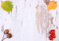 Украшение осени и космос экземпляра для текста на деревянной предпосылке Стоковое Фото