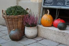Украшение осени с декоративными тыквами и заводами Стоковое Изображение