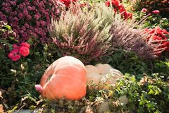 Украшение осени хеллоуина pumkins и падения цветет в городе справедливо стоковые фото