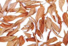 украшение осени Стоковая Фотография RF