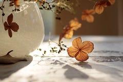 украшение осени Стоковое Изображение RF