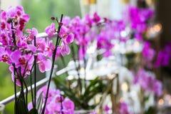 Украшение от розовых цветков и свечей Стоковые Изображения