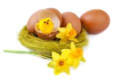 Украшение пасхального яйца с смешным цыпленоком на белизне Стоковое Изображение RF