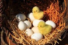 украшение пасхи цыпленка и яичек Стоковые Фото