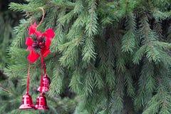 Украшение рождества с красными колоколами на пушистых елевых ветвях B Стоковое Изображение