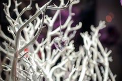 Украшение рождественской елки стеклянная смертная казнь через повешение сердца на белой ветви Стоковые Фото