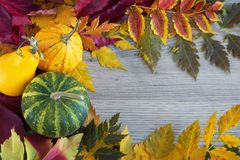 Украшение сезона падения с листьями тыквы и листвы красочными Стоковая Фотография