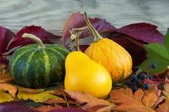 Украшение сезона падения с листьями тыквы и листвы красочными Стоковое Изображение RF