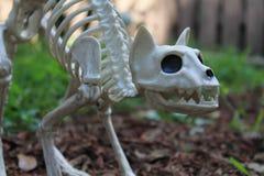 Украшение скелета кота хеллоуина Стоковое Фото