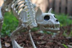 Украшение скелета кота хеллоуина Стоковая Фотография RF