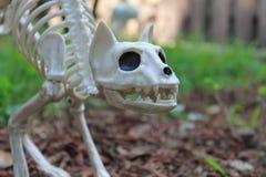 Украшение скелета кота хеллоуина Стоковые Фотографии RF