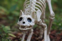Украшение скелета кота хеллоуина Стоковое фото RF