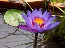 Украшение солнцецвета сада органическое в Таиланде Стоковые Фотографии RF