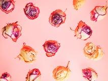 Украшение сделанное из высушенных розовых цветков Предпосылка роз Стоковое Фото