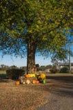 Украшение хеллоуина на сельском Арканзасе, США Стоковое Изображение RF