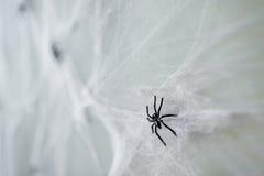 Украшение хеллоуина черного паука игрушки на паутине Стоковое Изображение