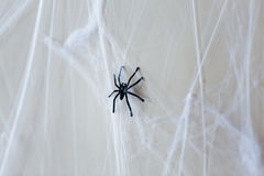 Украшение хеллоуина черного паука игрушки на паутине Стоковые Фото