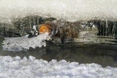 Украшение льда стоковые изображения