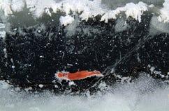 Украшение льда стоковое фото