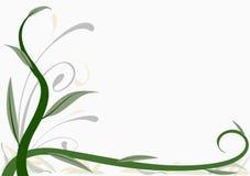 украшение 06 флористическое Стоковая Фотография RF