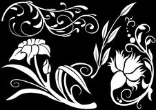 украшение 11 флористическое Стоковое Изображение RF