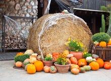 украшение halloween Стоковое Изображение