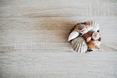 Украшение Seashell стоковое фото rf