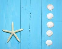 украшения морские Стоковое Изображение