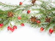 Украшения на белой предпосылке, плоды шиповника рождества ягод, звезды, ель разветвляют скопируйте космос Стоковое Фото
