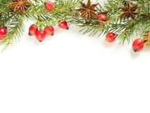 Украшения на белой предпосылке, плоды шиповника рождества ягод, звезды, ель разветвляют скопируйте космос стоковые изображения