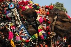 Украшенная головка верблюда, ярмарка Pushkar, Раджастан, Индия Стоковая Фотография