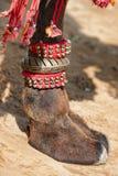 Украшенная нога верблюда Стоковое Фото