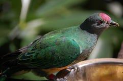 Украшенная дырочками возглавленная птица Стоковая Фотография RF