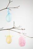 Украшенные пасхальные яйца на ветви Стоковое Фото