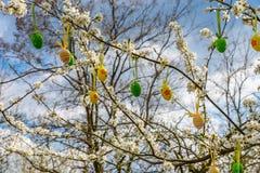 Украшенные яичка для пасхи висят на зацветая дереве на предпосылке голубого яркого неба Стоковые Изображения