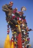 украшенный верблюд стоковые фотографии rf