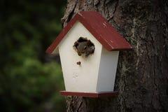 Украденное birdbouse Стоковое фото RF