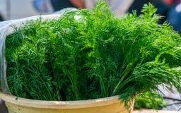 Укроп и петрушка сочной весны свежий зеленый Стоковые Фотографии RF